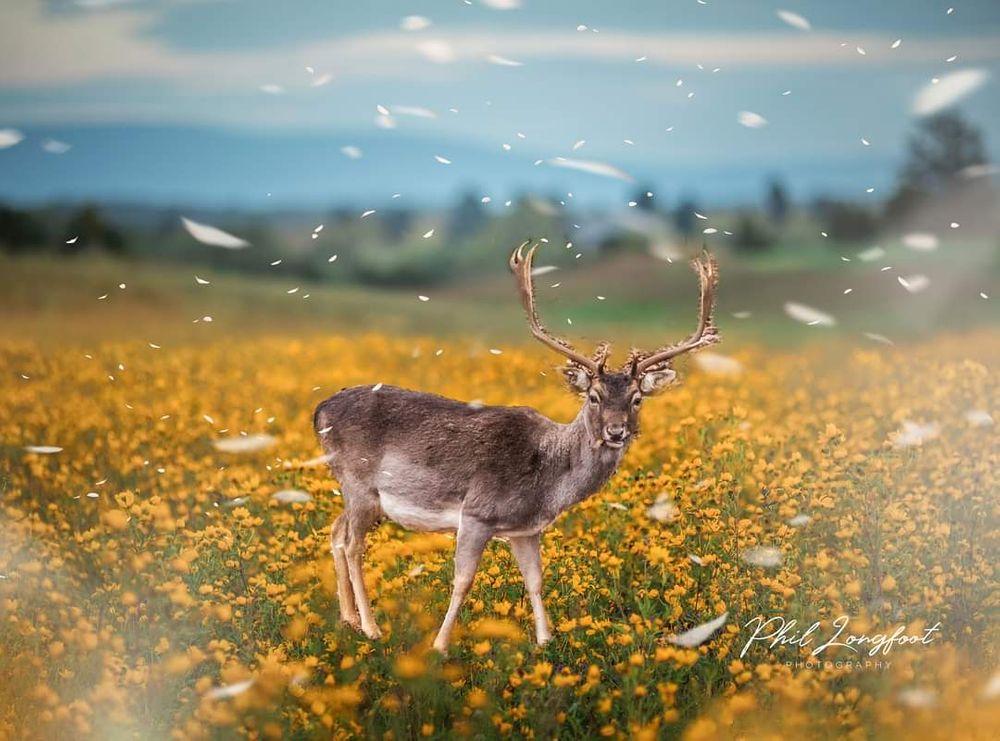 Photo in Abstract #deer #spring #springtime #nature #blossom #composite #composition #abstract #abstracts #artistic #overlays #beautiful #beautiful scene