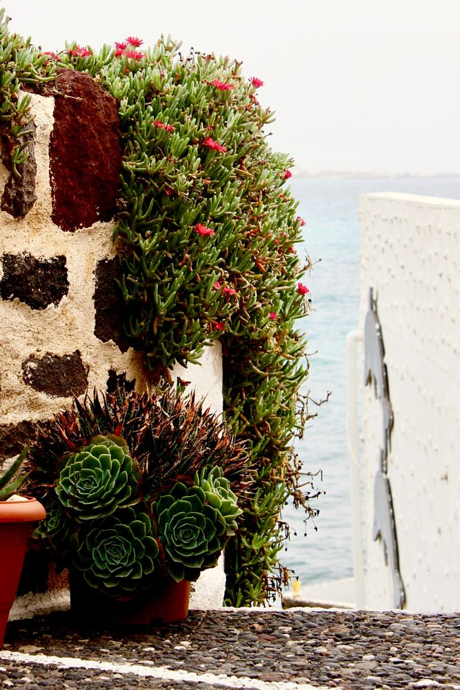 Photo in Travel #colors #beautiful #nature #plants #composition #succulents #flowers #blooms #travel