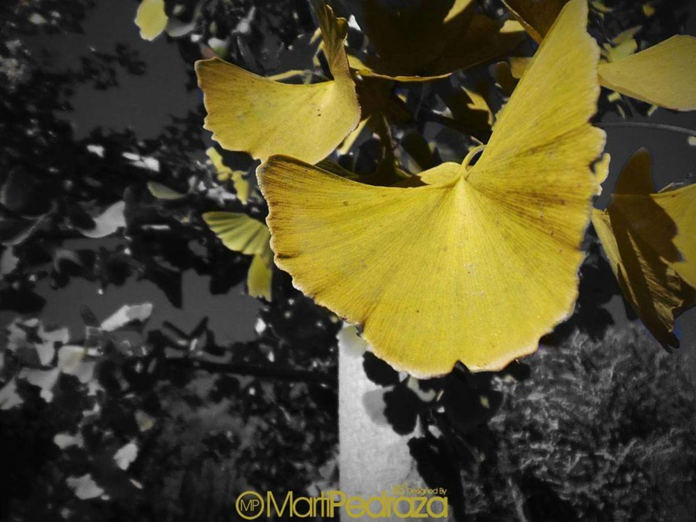 Photo in Nature #macro #nature #otoño #random #leaf #leave