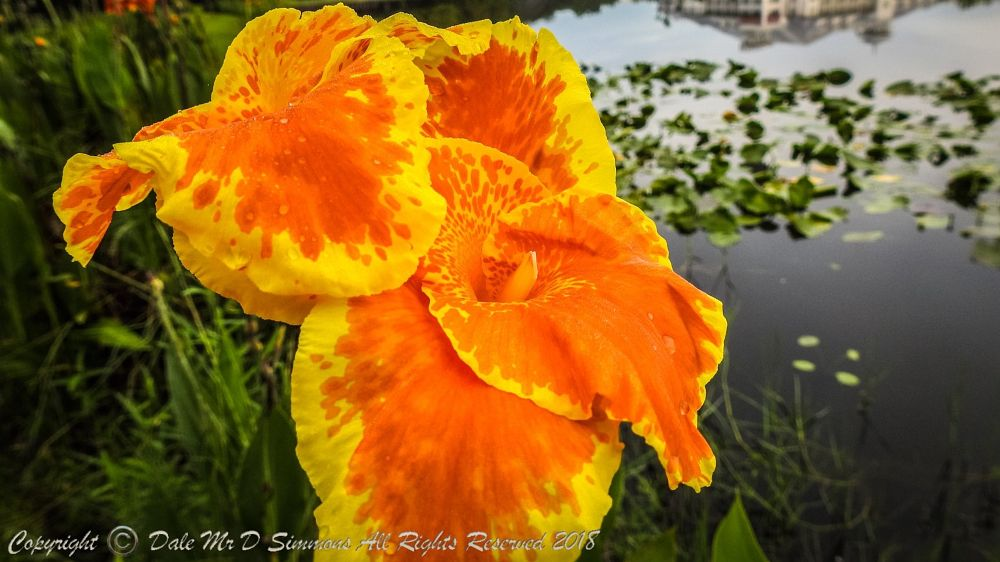 Photo in Macro #macro #flower #macro photography