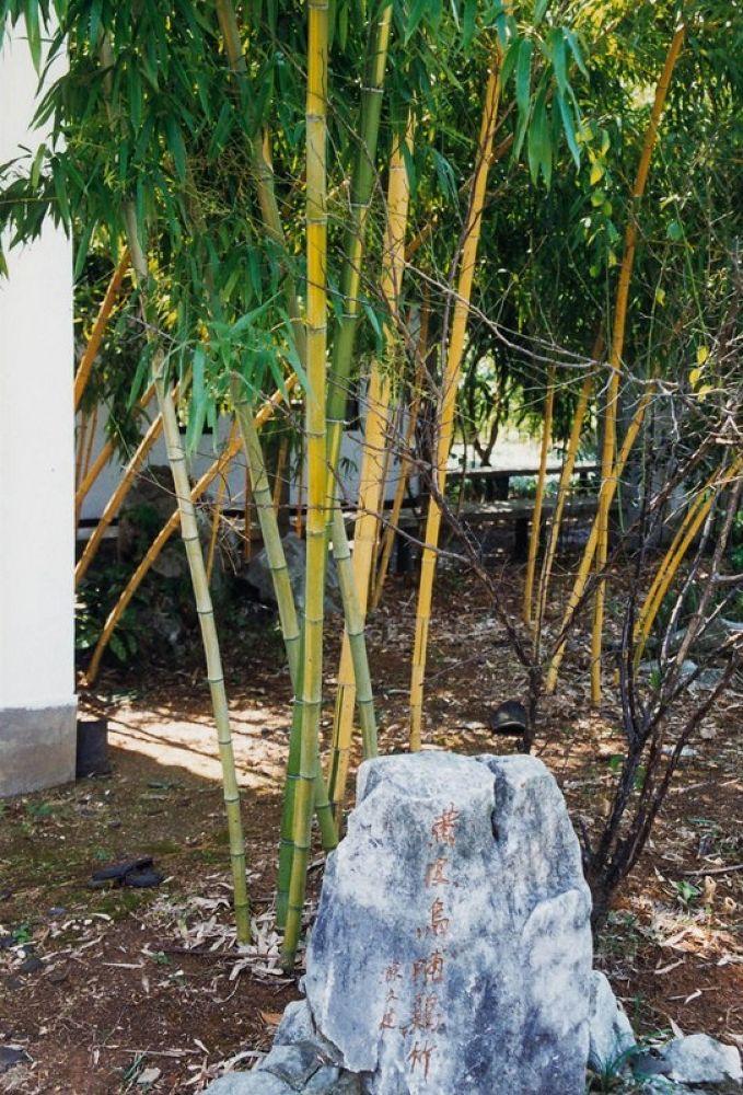 Photo in Random #zhejiang - anji bamboo - by la