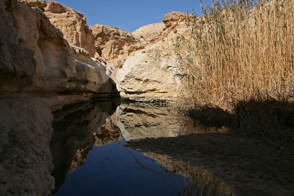 Photo in Landscape #negev #israel #shimon aluf