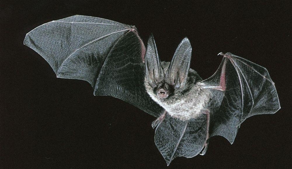 Photo in Random #bat