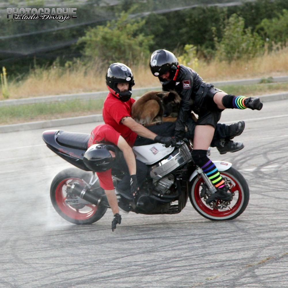 Photo in Sports #romain jeandrot #rolf circus #stunt #dog #motorbike #moto