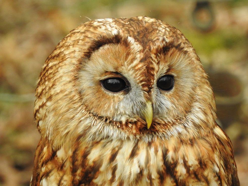 Photo in Animal #animal #bird #owl #macro #close-up #nature #wildlife