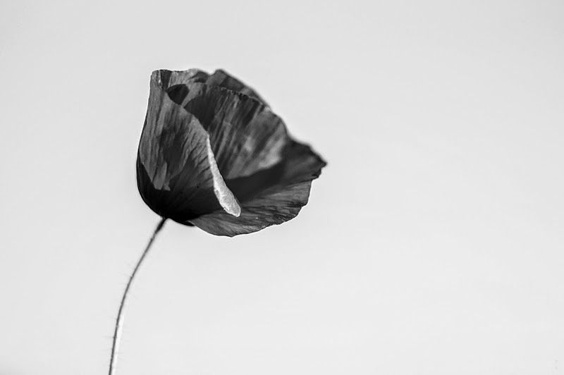 Photo in Nature #flower #black and white #sony #nature #macro