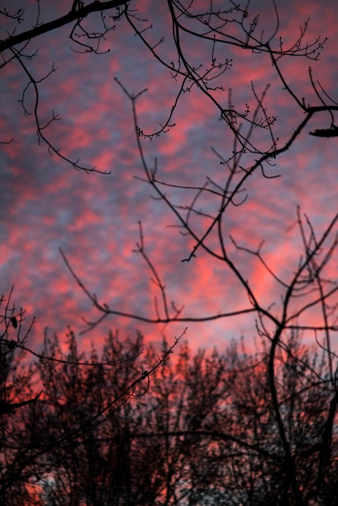 Photo in Nature #sunset #nature #trees #sun #clouds #focus #colorful #color #canon #photography #twigs #bark #pattern #waves #pure #michigan #wild #detroit #city #star