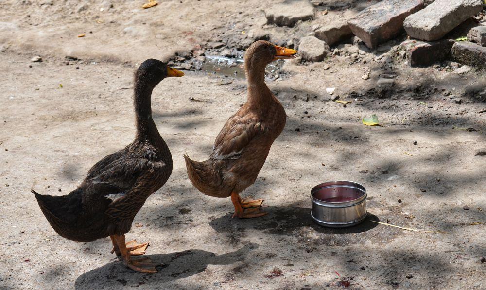 Photo in Random #ducks