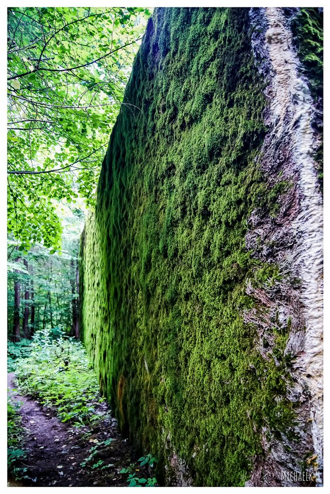 Photo in Urban #michaelk #random #nature #architecture #forest #green #photo #photography