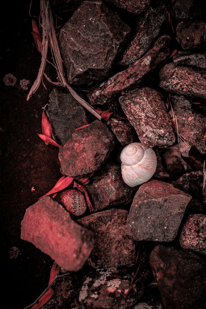 Photo in Random #snail #shell #closeup #macro #red #details