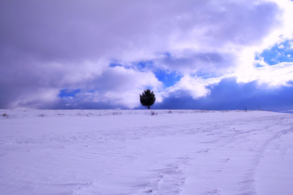 Photo in Random #solitaire #tree #one #mountain #landscape #clouds #snow #winter