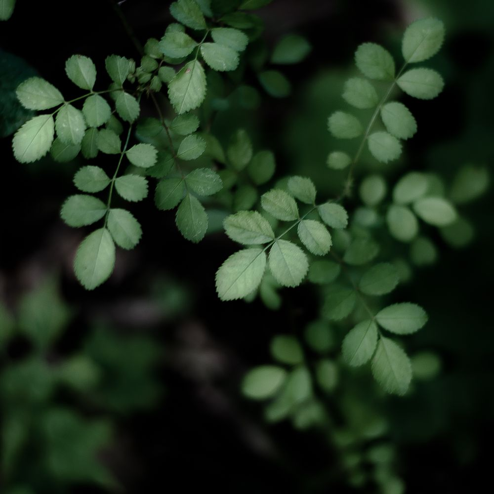 Photo in Abstract #leaves #green #forest #woods #abstract #quiet #lowlight #dof #blur #dreamy