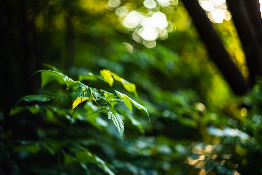 Photo in Nature #leaf #green #summer #helios #canon #bokeh #nature