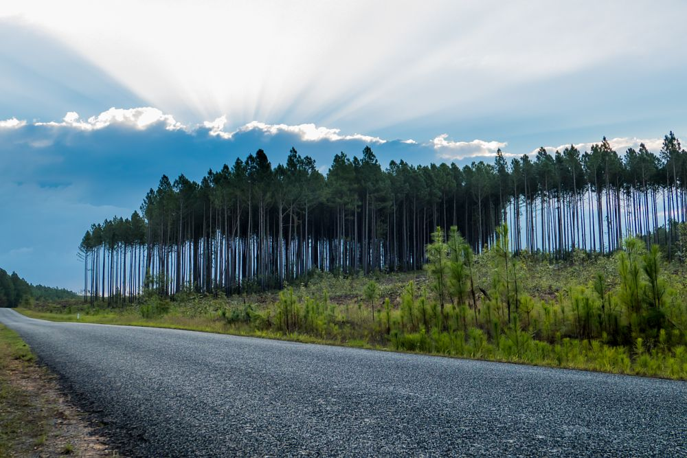 Photo in Landscape #tree #forest #sunset #sunray #clouds #road #walk #walking #outside #outdoors #no person
