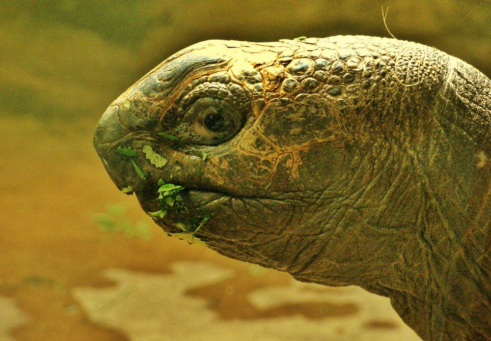 Photo in Random #animal #animals #turtle #nature