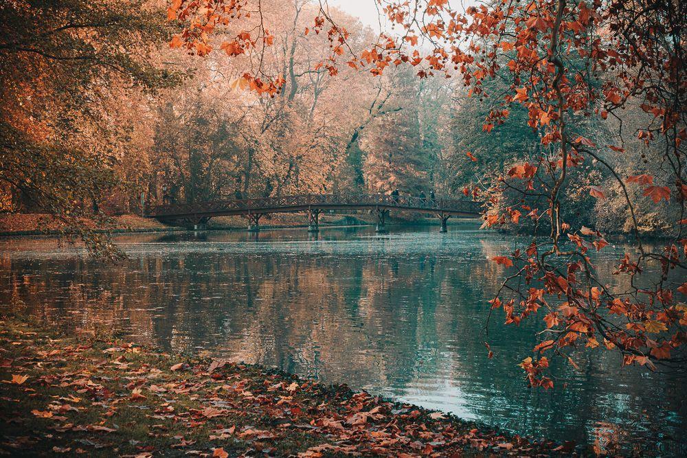 Photo in Nature #bridge #park #autumn #wooden #scenic