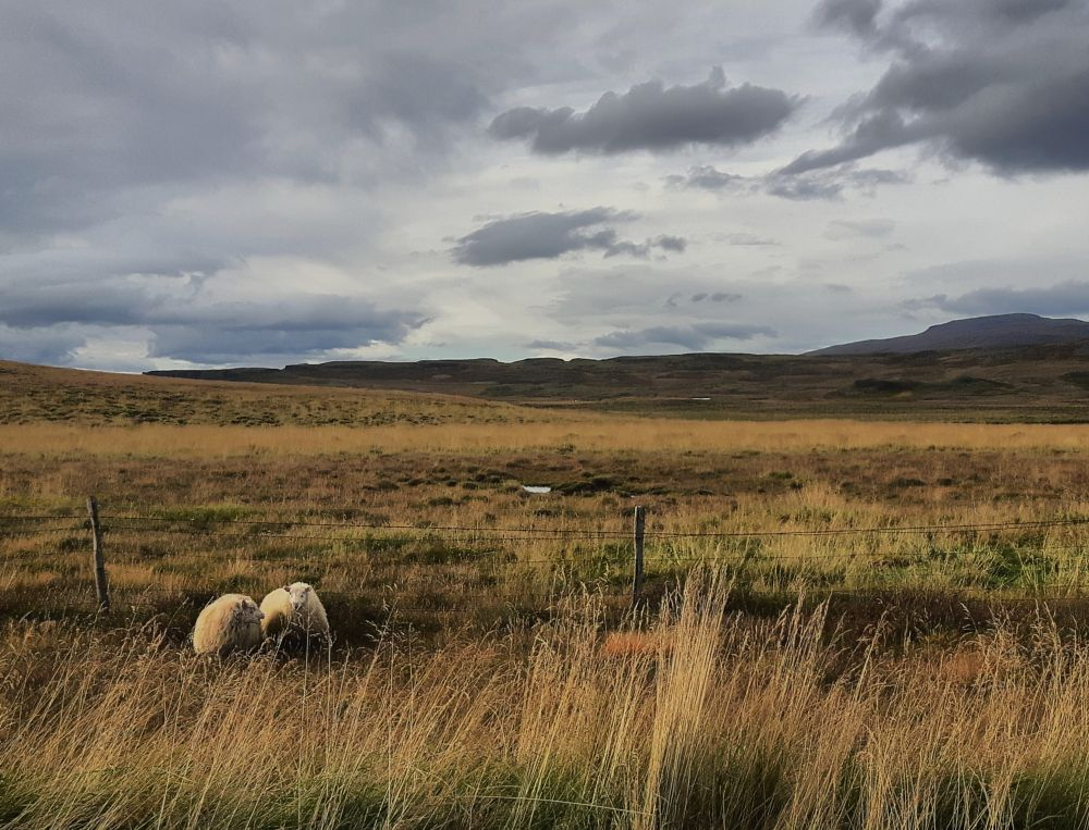 Photo in Landscape #sheep #iceland #clouds