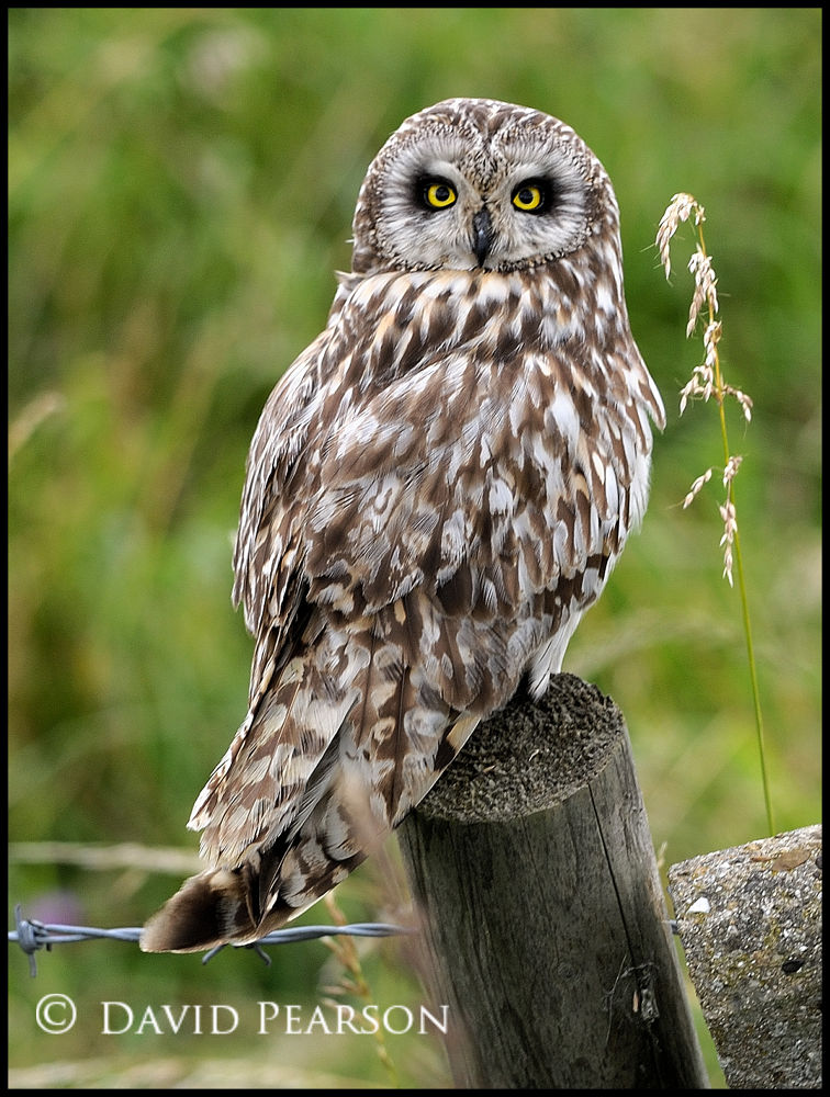 Photo in Nature #wild #male #owl #riverside #short eared