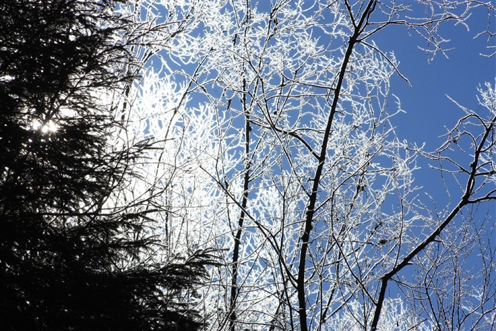 Photo in Random #winter #2011