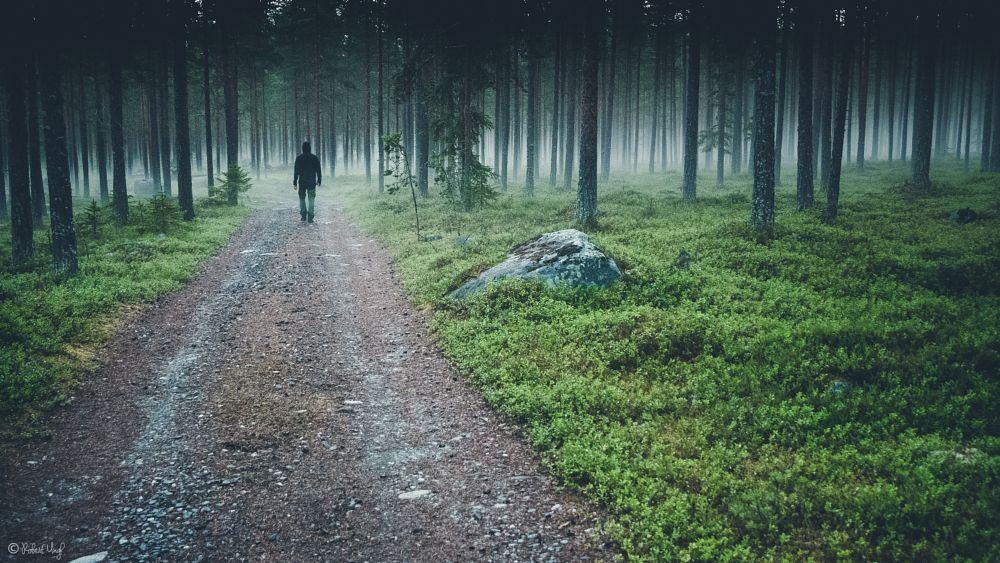 Photo in Nature #nature #outdoors #mist #misty #forest #green #summer #mornings #hike #lumix #lumixnordic #panasonic #lumixambassador #mysoundofsilence #robertungh #night #black