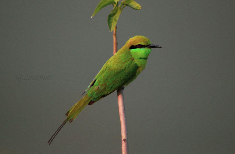 Photo in Random #birds #green #bee #eater #colorful #beautiful