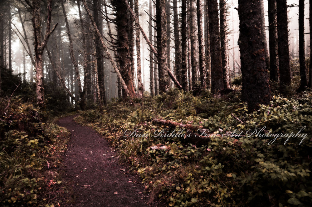 Photo in Landscape #forest #oregon #ir photography