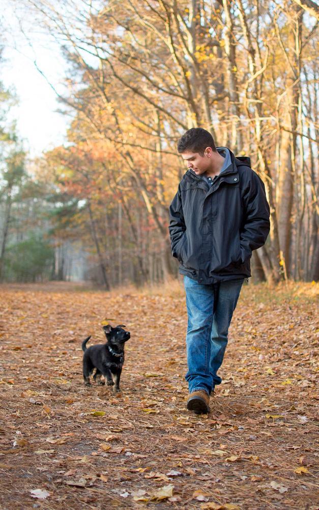 Photo in Animal #german shepherd #puppy #mans best friend #dog #fall