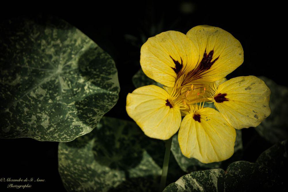 Photo in Random #flower #nature #yellow