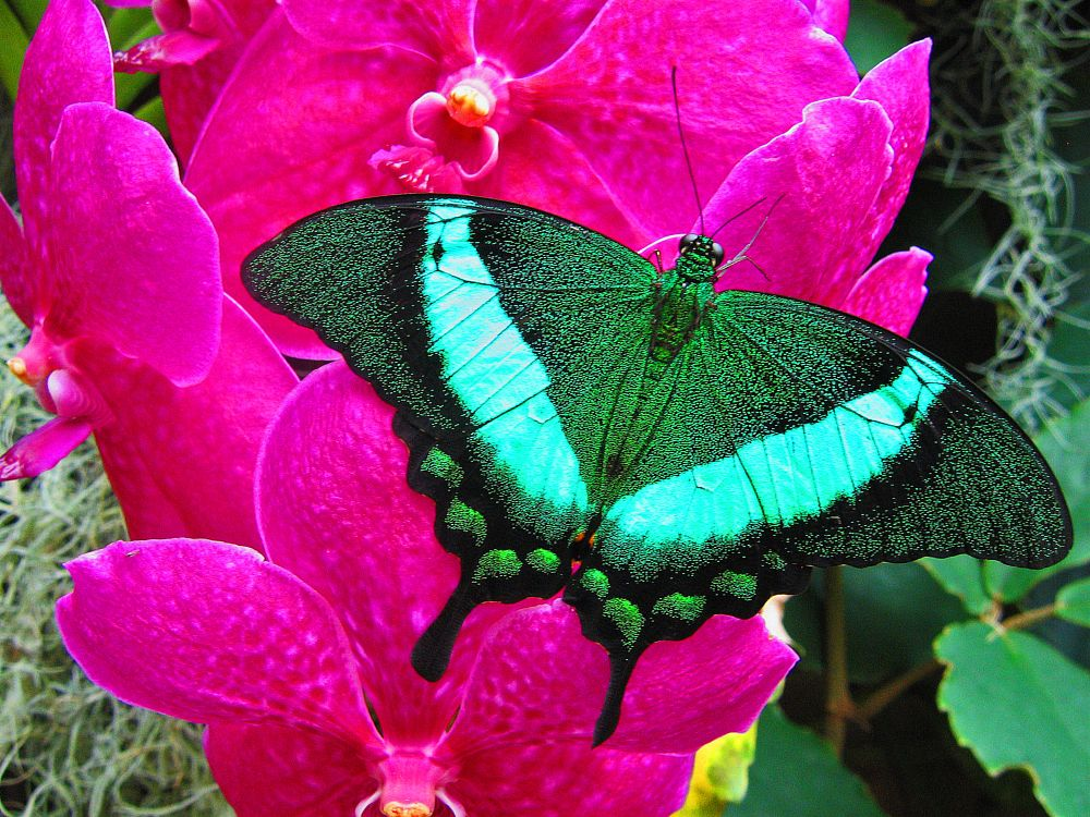 Photo in Nature #butterfly #green #flower #insect #nature #brightcolours #closeup