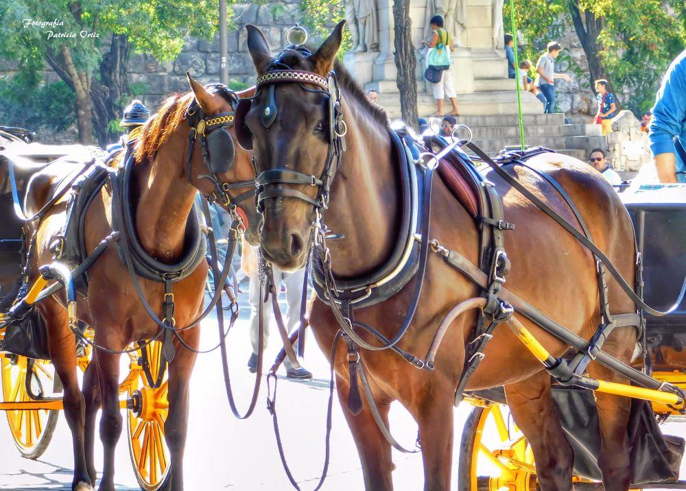 Photo in Cityscape #sevilla spain travel #cityscape horses nikon