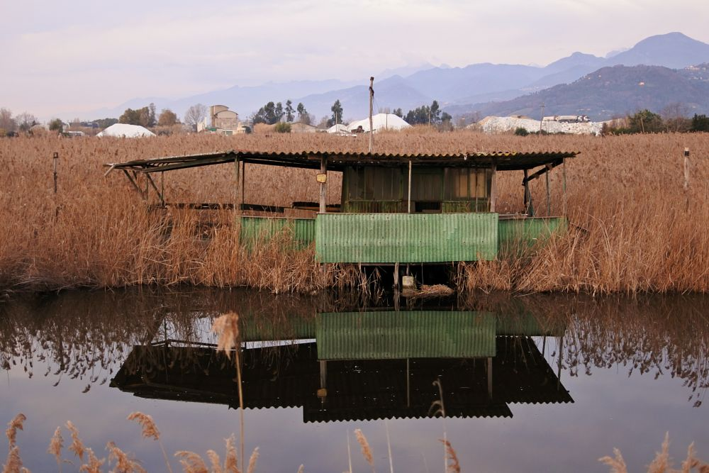 Photo in Random #reflections #lake #swamp #river #picoftheday