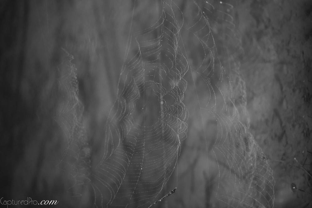 Photo in Macro #spider #net #mother nature #macro #capturedpro.com #melbourne