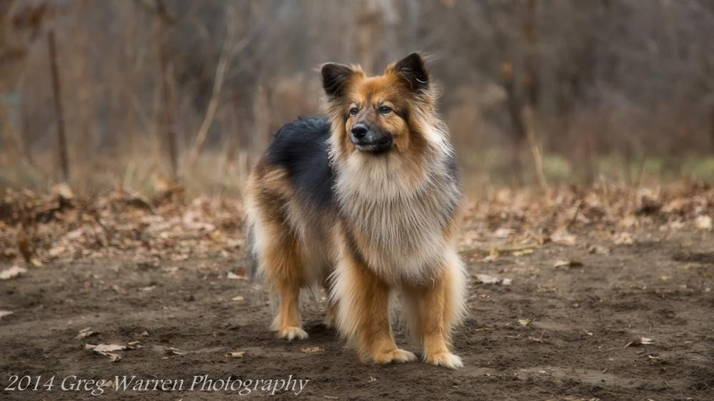 Photo in Animal #dog #dogs