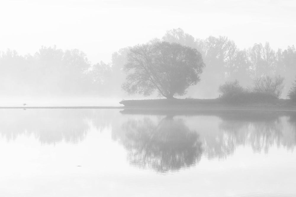 Photo in Random #morning #high-key #nikon #sigma