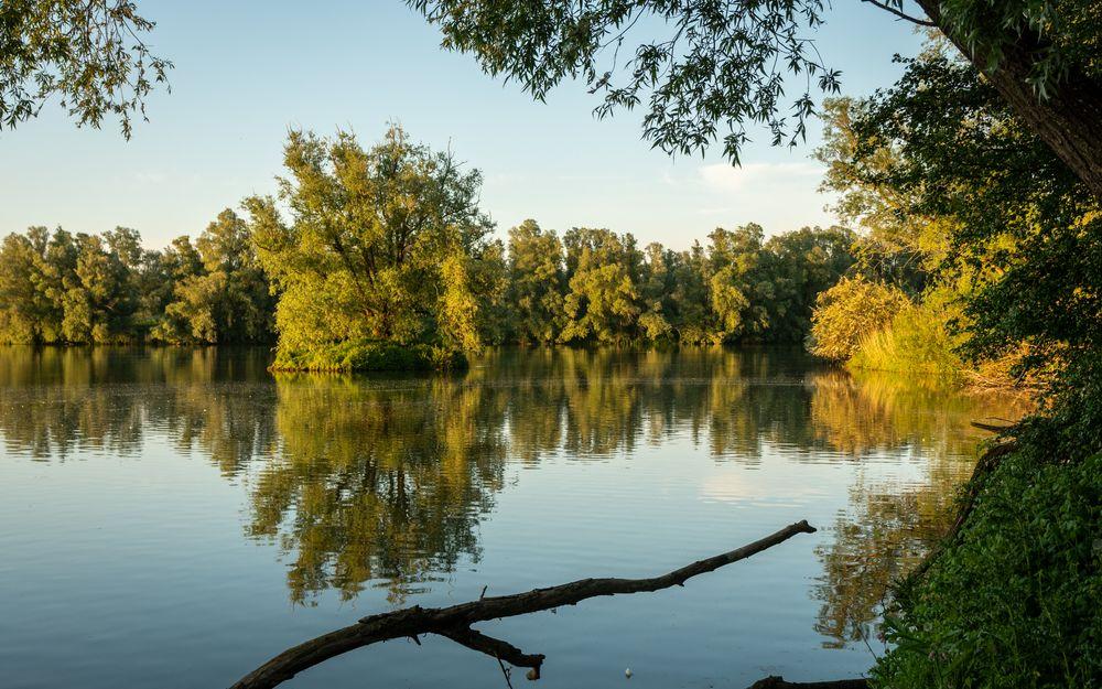 Photo in Landscape #lente #reflecties #weerspiegeling #zonsondergang #spring #reflections #mirrorring #sunset #water #bomen #trees #tak #brance #warm licht #warm light #june #2021 #netherlands #landscape