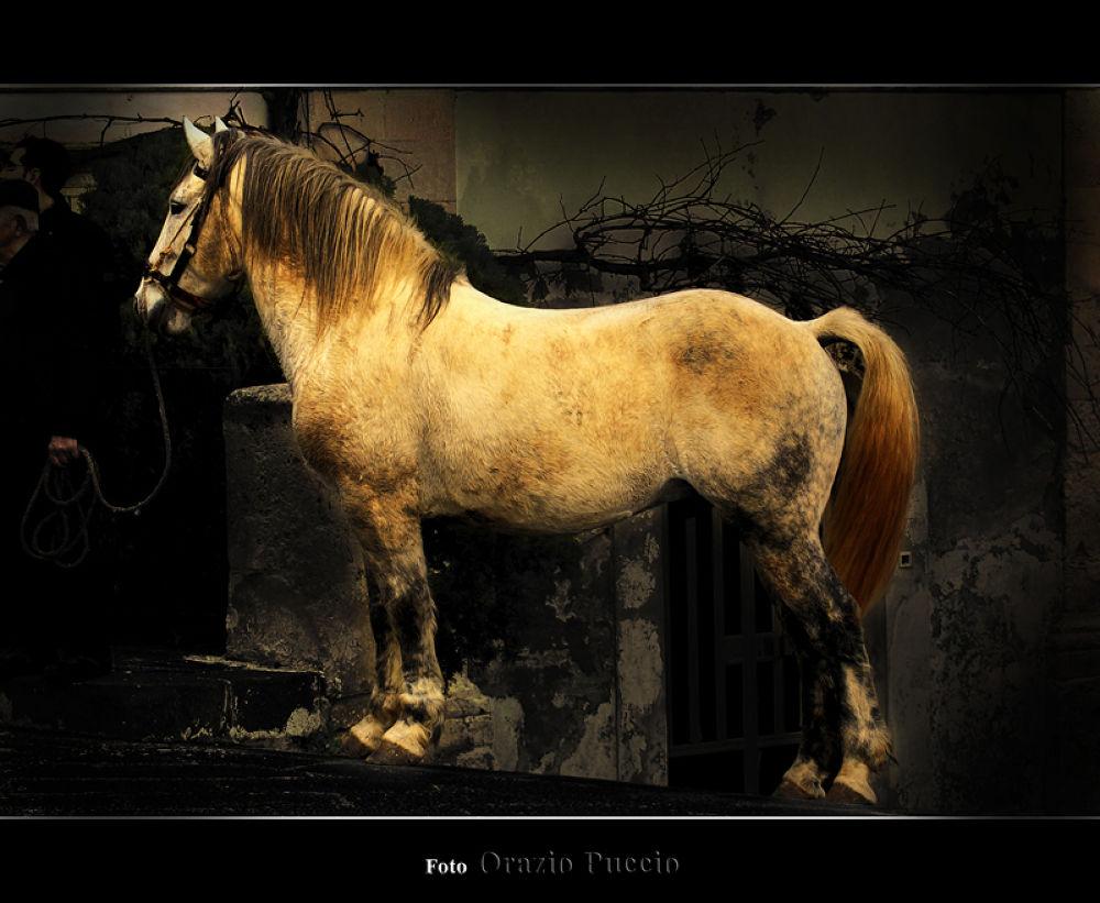 Photo in Animal #oraziopuccio #cavallo