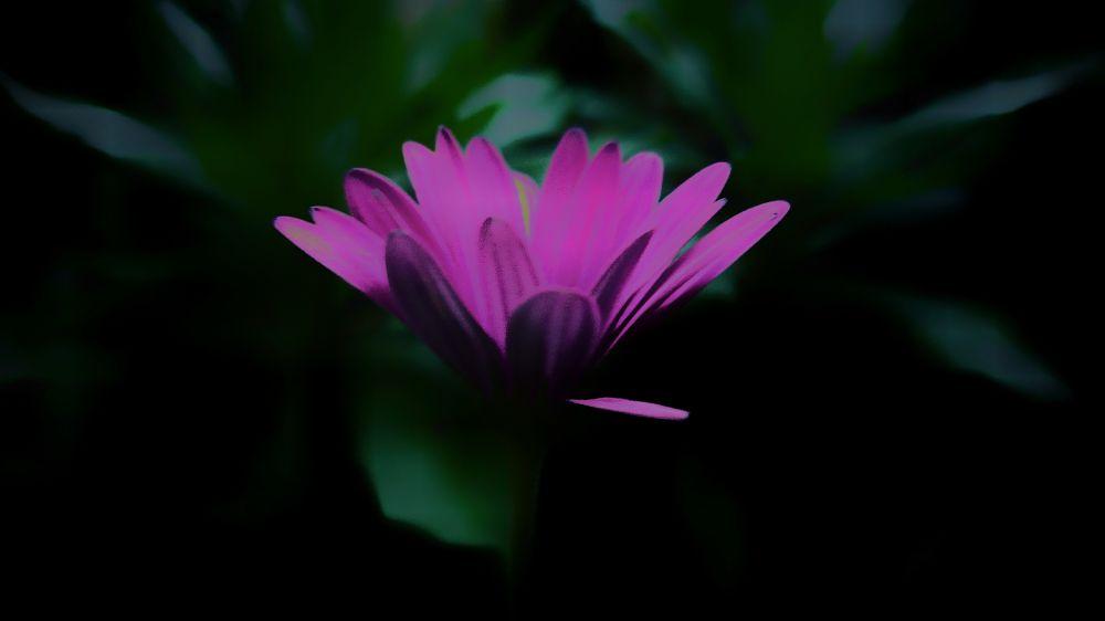 Photo in Random #flower #nature #abstract #autumn
