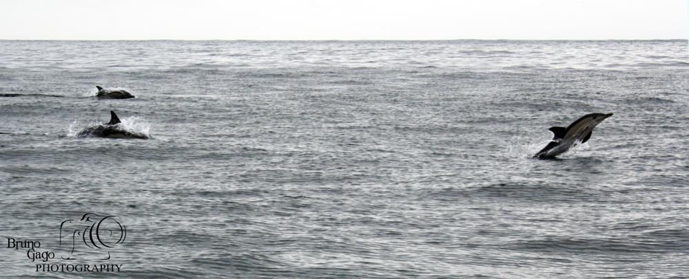 Photo in Animal #dolphins #golfinhos #dofins #delfines #portugal #peniche #berlengas