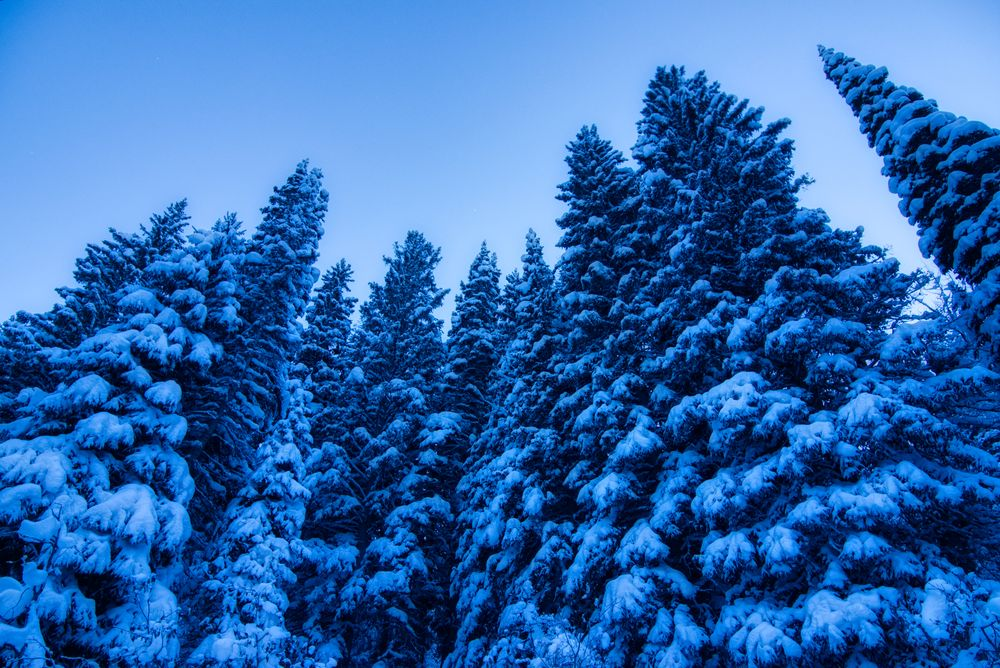 Photo in Nature #snow #frozen #amazing #beautiful #bluehour #forest #pine trees #wastch mountains #utah