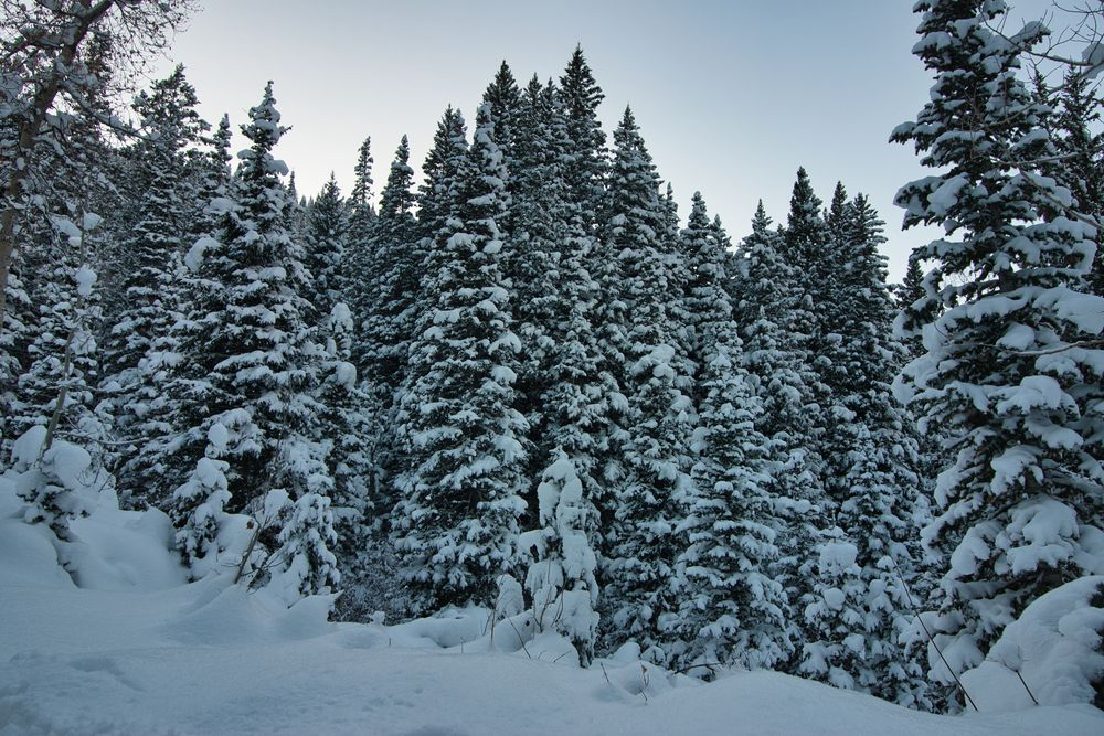 Photo in Nature #snow #forest #dense #heavy #beautiful #nature #winter wonderland #trail #outdoors #mountains