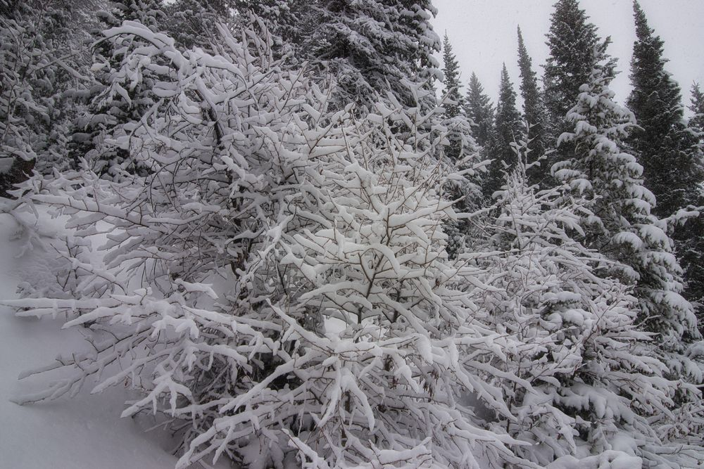 Photo in Nature #winter #branches #trees #forest #nature #winter wonderland #snow #outdoors