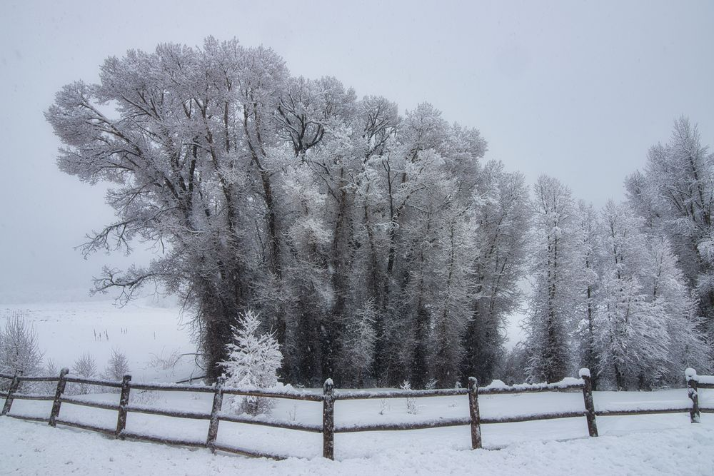 Photo in Landscape #snow #winter #ranch #rural #country side #trees #landscape #beautiful