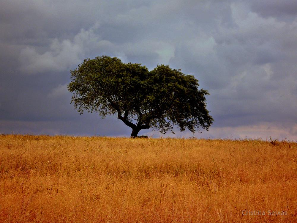 Photo in Landscape #yellow #tree #cork #field #campo #amarelo #árvore #sobreiro