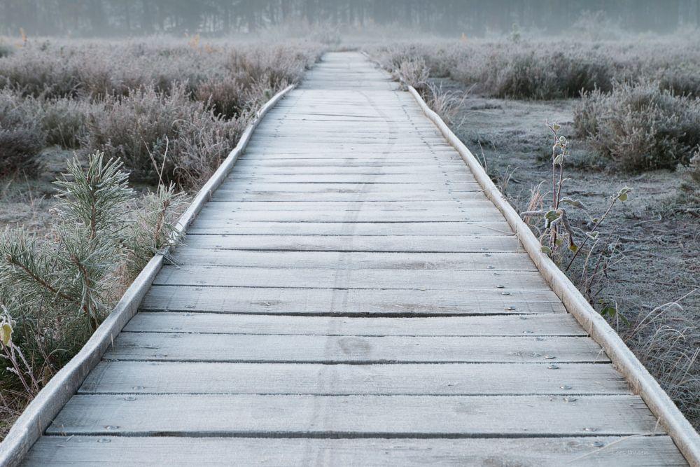 Photo in Landscape #vlonderpad bevroren landscha