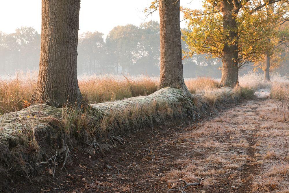 Photo in Landscape #bomen vorst bos  mastbos b