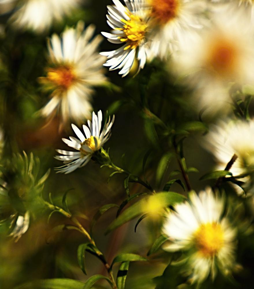 Photo in Nature #svetlo #kvietky #jeseň