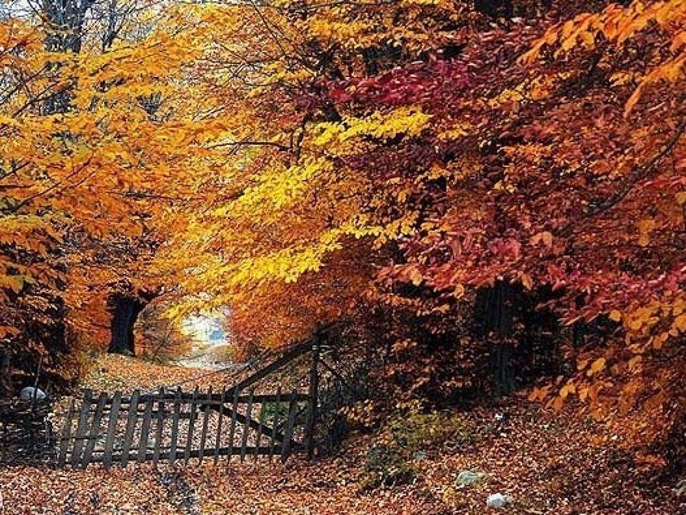Photo in Random #in #autumn