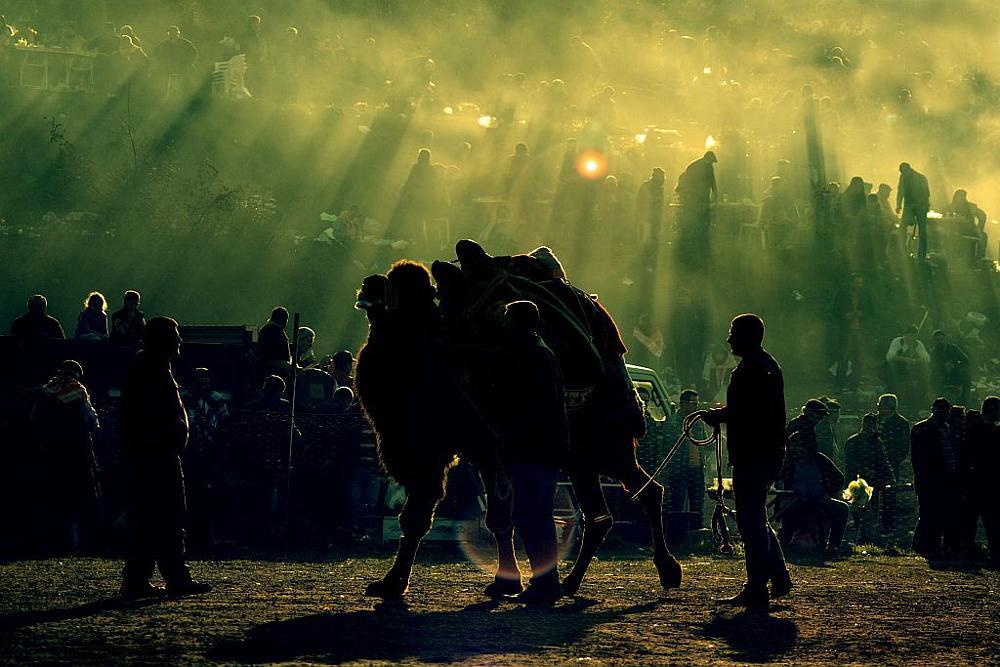 Photo in Journalism #cemalsepici #camelwrestling #life #light