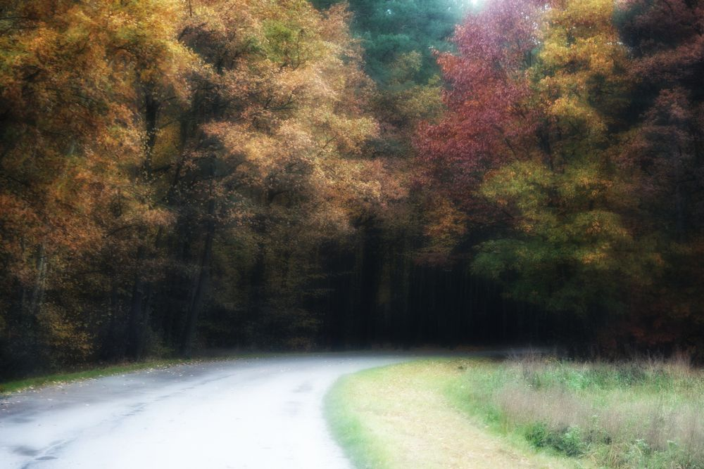 Photo in Fine Art #autumn #forest #road #colors #youpic