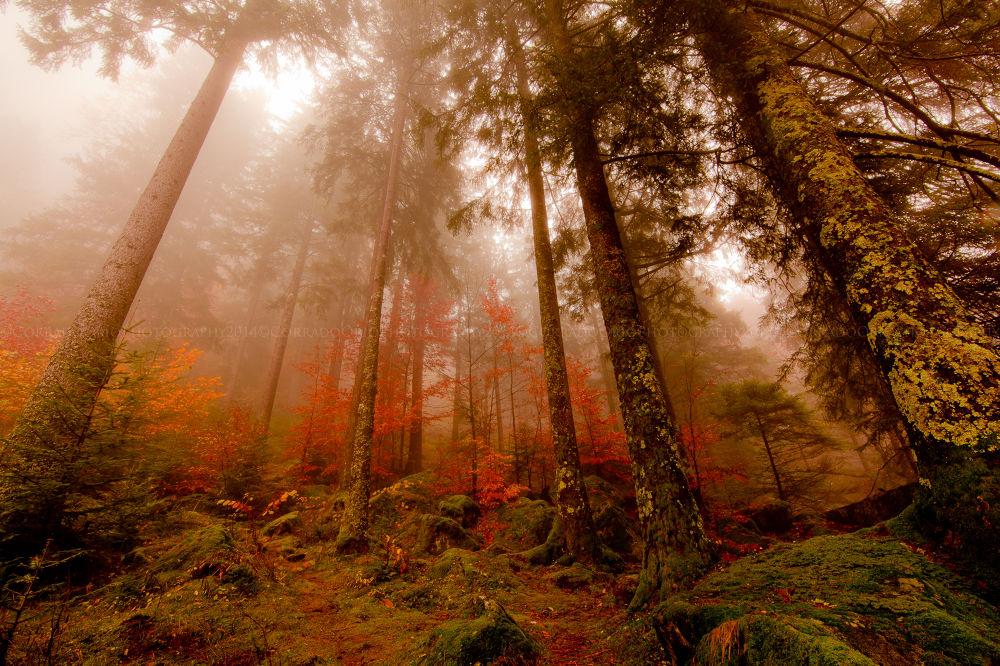 Photo in Landscape #nature #bosco #italia #italy